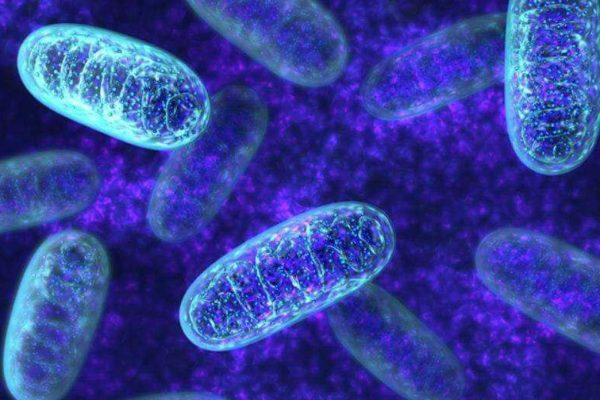 Bis zum 1. August bleibt der Preis für Mitochondrien-Spende-Programme noch bei 6900 und 9 900 Euro. Ab dem 1.August wird sich der Preis erhöhen, und dementsprechend werden die Kosten – 9900 und 14 900 betragen.